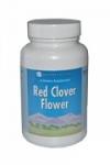 Цветки красного клевера  Red clover flowers
